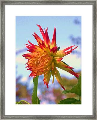 Orange And Yellow Dahlia Framed Print by Eric  Schiabor