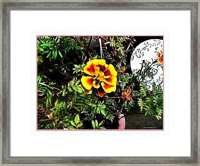 Framed Print featuring the photograph Orange And Yellow Flower by Joan  Minchak