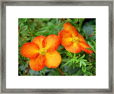 Framed Print featuring the photograph Orange And Yellow by Marilynne Bull