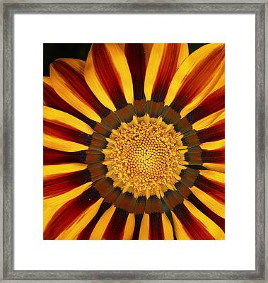 Orange And Yellow Over And Over Framed Print
