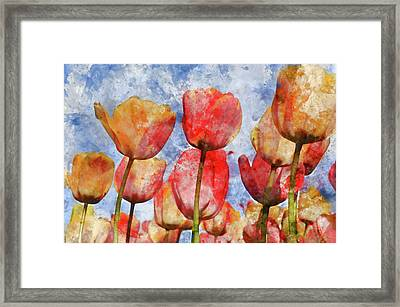 Orange And Yellow Tullips With Blue Sky Framed Print