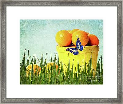 Orange Framed Print by Angela Doelling AD DESIGN Photo and PhotoArt