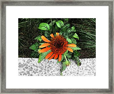 Framed Print featuring the photograph Orange At Highline Nyc by Joan  Minchak