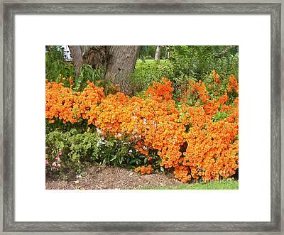 Orange Beauty Framed Print by Deborah Selib-Haig DMacq