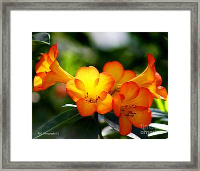 Framed Print featuring the photograph Orange Bells  by Marty Gayler