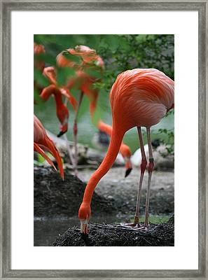 Orange Bird Framed Print by Deborah Molitoris