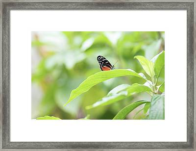 Framed Print featuring the photograph Orange Black Butterfly by Raphael Lopez