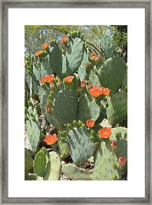 Orange Blossom Cactus  Framed Print by Aimee L Maher Photography and Art Visit ALMGallerydotcom