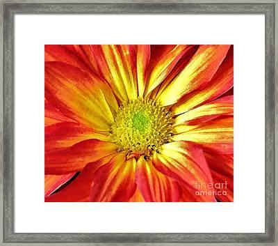 Framed Print featuring the photograph Orange Burst by Allen Beatty