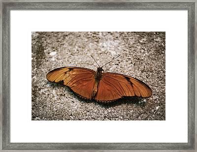 Orange Butterfly Framed Print