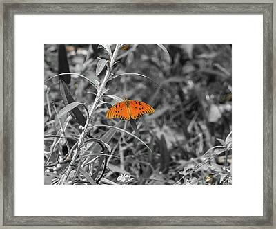 Orange Butterfly In Black And White Background Framed Print
