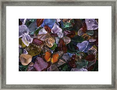Orange Butterfly On Sea Glass Framed Print by Garry Gay