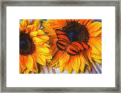 Orange Butterfly On Sunslower Framed Print by Garry Gay