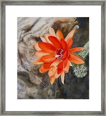 Orange Cactus Flower II Framed Print