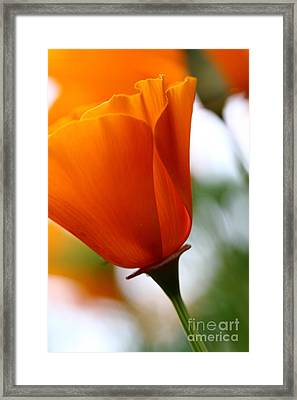 Orange California Poppy . 7d14789 Framed Print by Wingsdomain Art and Photography