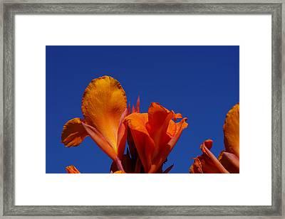 Orange Canna Framed Print