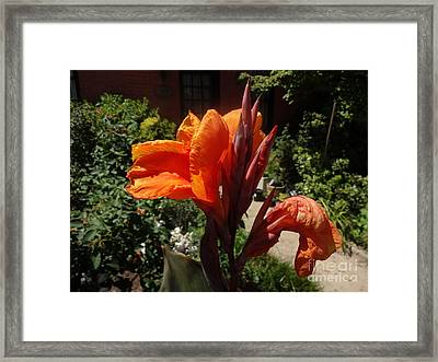 Framed Print featuring the photograph Orange Canna Lily by Rod Ismay
