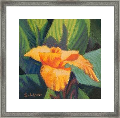 Orange Cannas Framed Print
