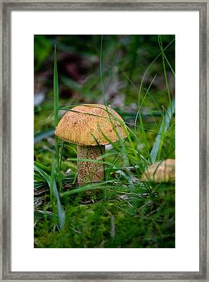 Orange Cap Framed Print by Teresa Mucha