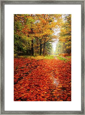 Framed Print featuring the photograph Orange Carpet by Dmytro Korol