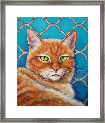 Orange Cat On Turquoise Quatrefoil Framed Print