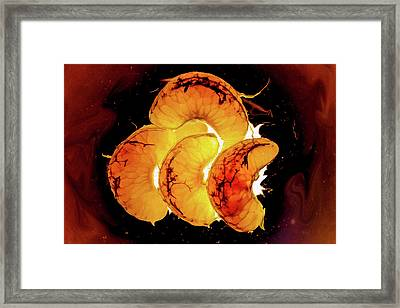 Orange Choc Framed Print