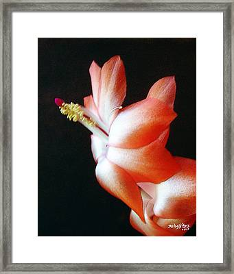 Orange Christmas Cactus Framed Print