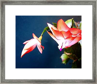 Orange Christmas Cactus II Framed Print