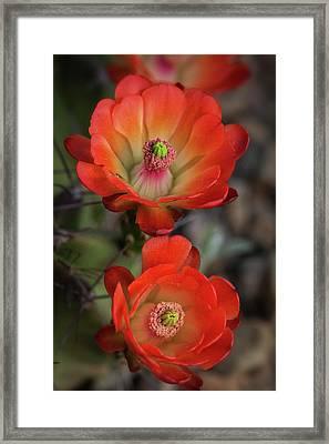 Framed Print featuring the photograph Orange Claret Dreams  by Saija Lehtonen