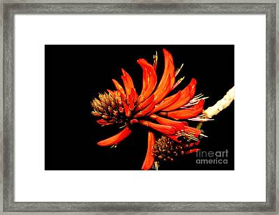 Framed Print featuring the photograph Orange Clover II by Stephen Mitchell