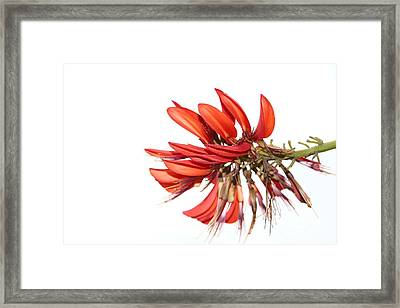 Framed Print featuring the photograph Orange Clover IIi by Stephen Mitchell