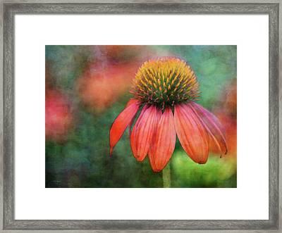 Orange Coneflower 2576 Idp_2 Framed Print