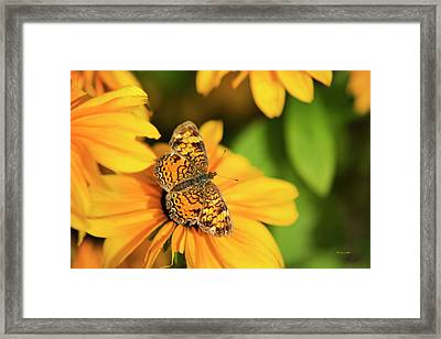 Framed Print featuring the photograph Orange Crescent Butterfly by Christina Rollo