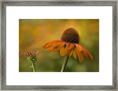 Orange Crush Framed Print by Ann Bridges