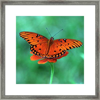 Orange Crush Framed Print by Martha Catherine Ivey
