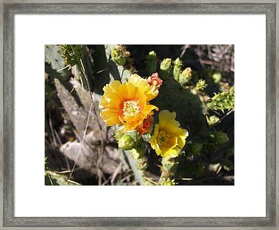 Orange Cup Framed Print by James Granberry