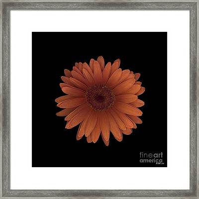 Orange Daisy Front Framed Print