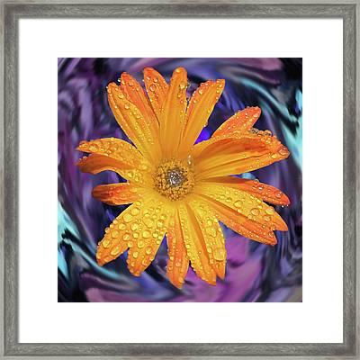Orange Daisy Swirl Framed Print