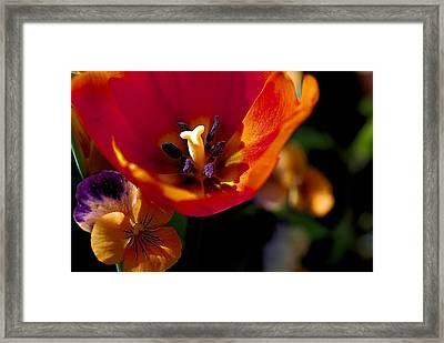 Orange Delight Framed Print by Don  Wright