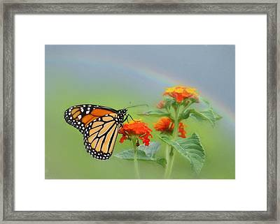 Orange Delight Framed Print by Lori Deiter
