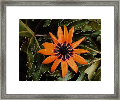 Orange Demeanor  Abstract Framed Print by Debbie May