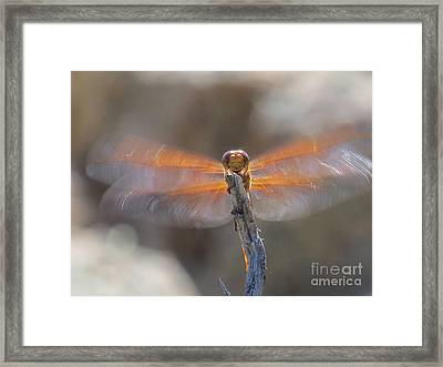 Dragonfly 4 Framed Print