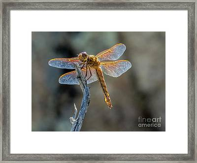 Dragonfly 6 Framed Print