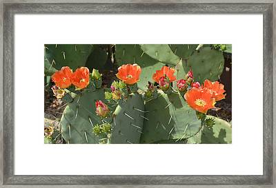 Orange Dream Cactus Framed Print