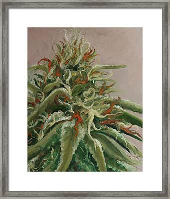 Orange Dreamsicle Framed Print by Cristin Paige