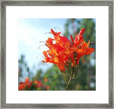 Orange Echo Framed Print by Jean Booth
