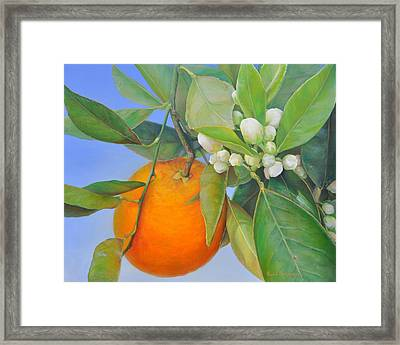 Orange En Bouton Framed Print by Muriel Dolemieux