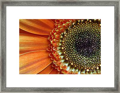 Orange Energy Framed Print by Dan Holm