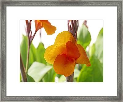 Orange Field Framed Print