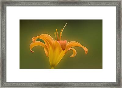 Orange Flower Head  Framed Print